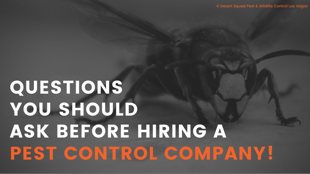 Questions To Ask Before Hiring a Pest Control Company in Las Vegas